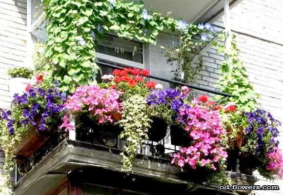 Наполнение балконных контейнеров для цветов субстратом